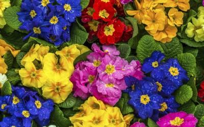Blooming Haddington
